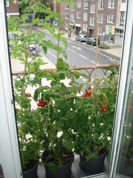 zeigt her eure zutaten aus dem eigenen garten balkon terrasse ein paar fotos von meinen. Black Bedroom Furniture Sets. Home Design Ideas