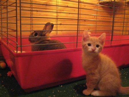katzen und hasen zusammenhalten geht das hund katze maus forum. Black Bedroom Furniture Sets. Home Design Ideas