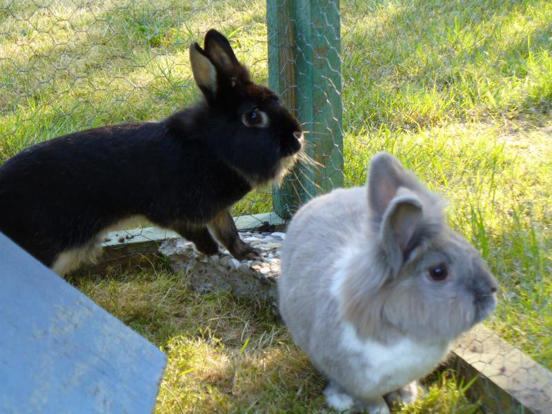 bauen Kaninchengehege Flöhchen bleibt 3381843369