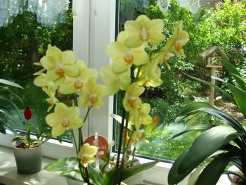 verbl hte orchidee wer hat tips haus garten. Black Bedroom Furniture Sets. Home Design Ideas