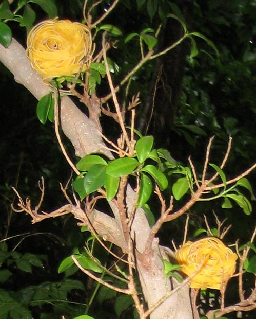 Nudeln Garten 2005863905