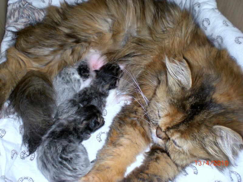 katze bekommt babies was wird unser hund tun gefahr f r babies wer hat erfahrung hund. Black Bedroom Furniture Sets. Home Design Ideas