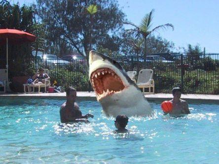The Google Picture Game Schwimmbad%20mit%20Hai%20klein%20